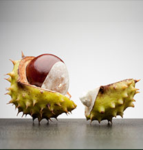 Conker split open
